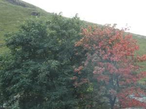 AutumnTreesFW